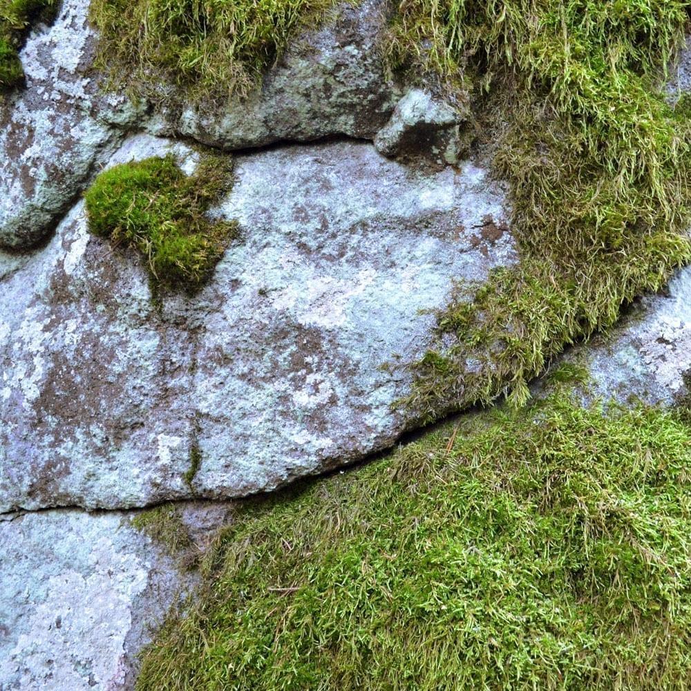 Kivimuuri Yoldia